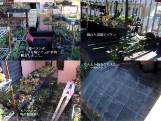 台風17号被害はお陰様で団扇サボテン鉢が倒れたくらいで済みました!2012.10.01