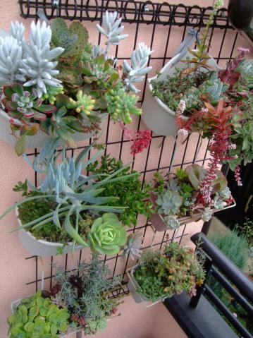 多肉植物寄せ植え(2階ベランダ軒下)~10月末の様子2012.10.27