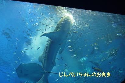 20120820132041acb.jpg