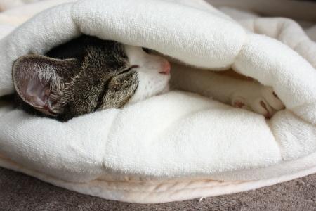 猫が寝てますよ~