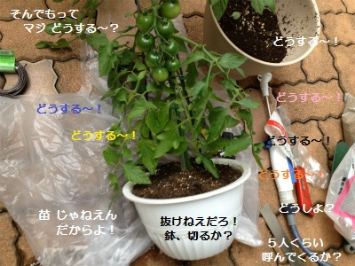 5IMG_3248.jpg