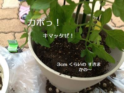7IMG_3252.jpg
