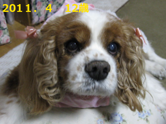 20120622215439434.png
