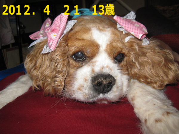 201206222213253f4.png