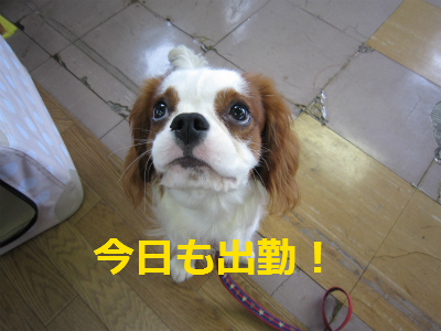 201207121214058c1.png