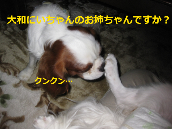 IMG_2469.png