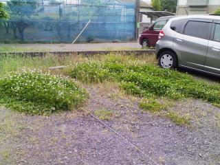 草刈り_01