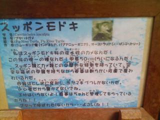 スッポンモドキ_03