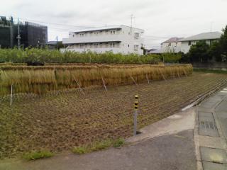 稲刈り_03