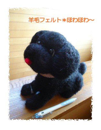 黒トイプーちゃん1