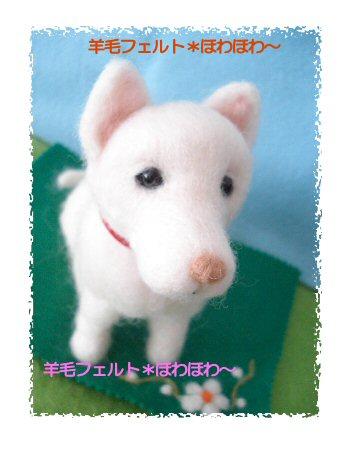 北海道犬2