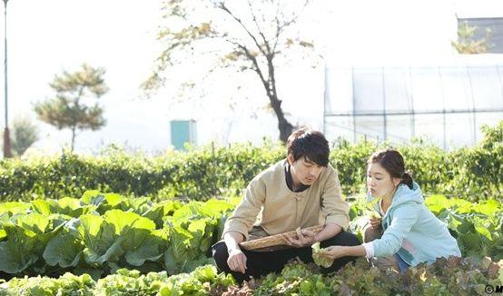 レタス畑のロマンス