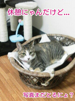 fc2blog_20120521230431152.jpg