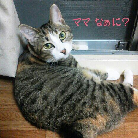 fc2blog_20120706061211c1e.jpg