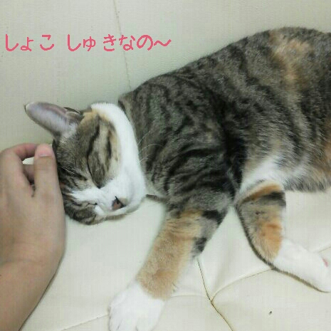 fc2blog_201207072149461b3.jpg