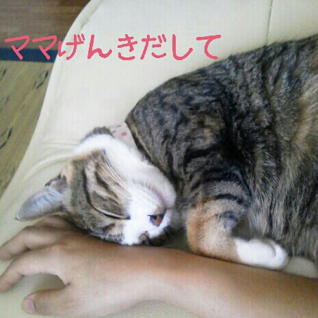 fc2blog_2012071020551430c.jpg