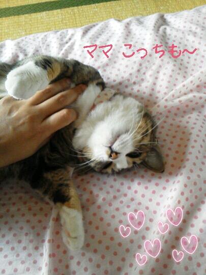 fc2blog_2012072110001700e.jpg