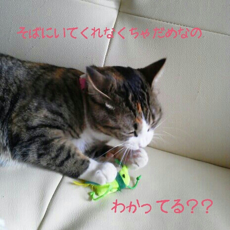 fc2blog_2012072200301695d.jpg