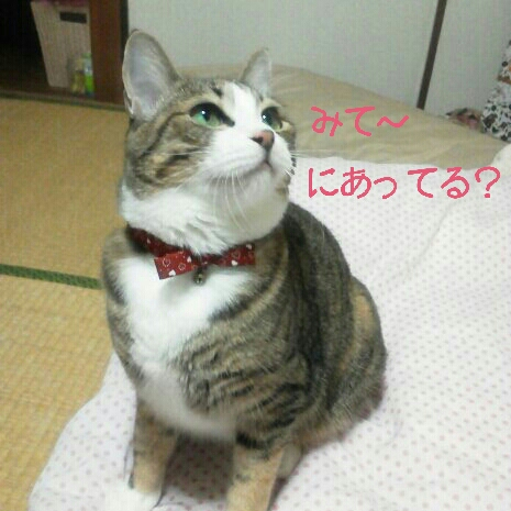 fc2blog_20120909090634a27.jpg