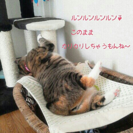 fc2blog_201209140750197ea.jpg