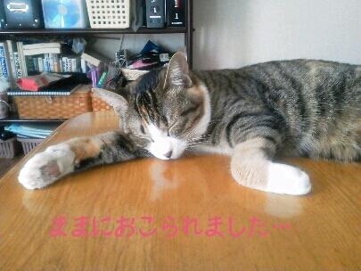 fc2blog_20120916104915d2e.jpg