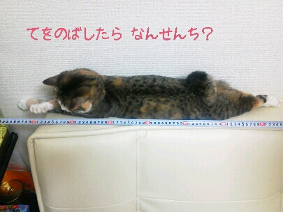 fc2blog_20120918204504b6a.jpg