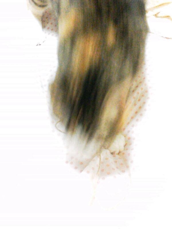 fc2blog_2012092500560417b.jpg