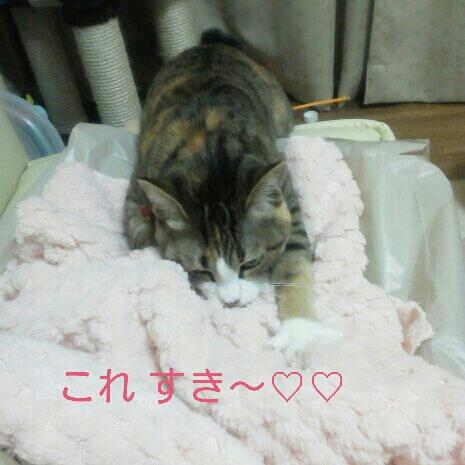 fc2blog_201211032314059dc.jpeg