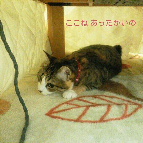 fc2blog_2012110416595793d.jpeg