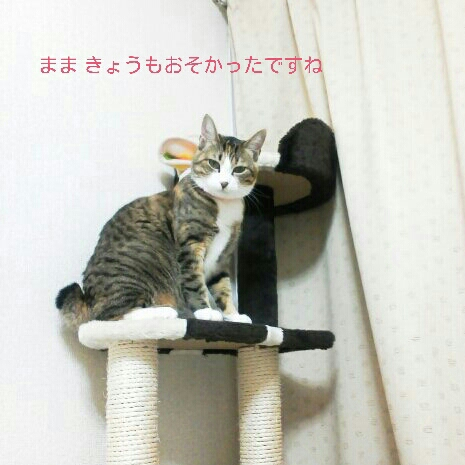 fc2blog_20121106001439857.jpg
