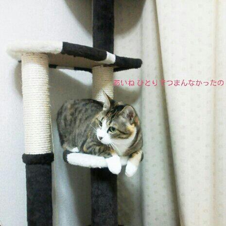 fc2blog_201211060015399e5.jpg