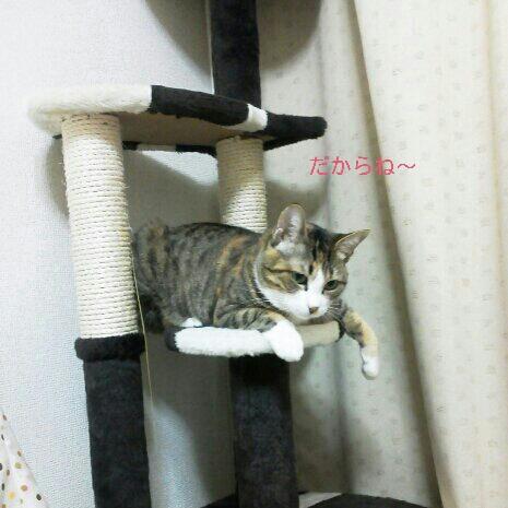 fc2blog_2012110600155988d.jpg