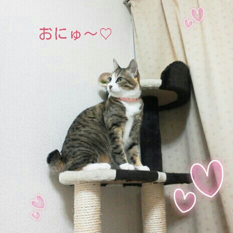 fc2blog_20121107002830d8e.jpg
