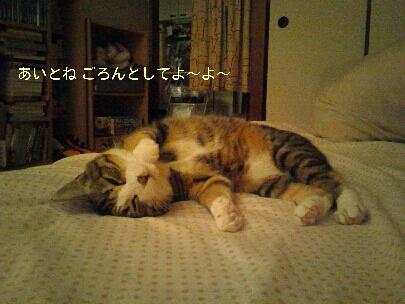 fc2blog_20121108154749ee3.jpg