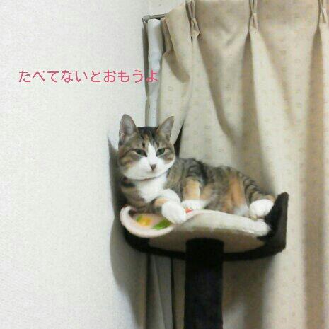 fc2blog_20121120002725144.jpg