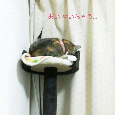 fc2blog_20121120002757193.jpg