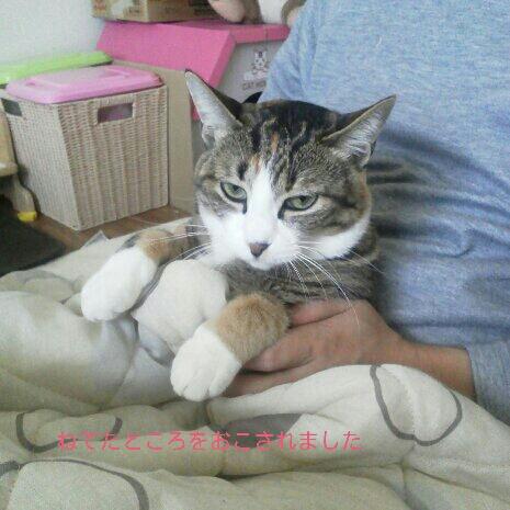 fc2blog_201211241937020da.jpg