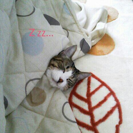 fc2blog_20121126004359cfb.jpg