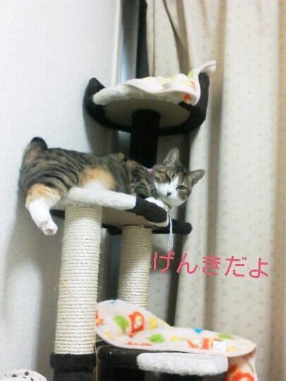 fc2blog_2012121722552108a.jpg